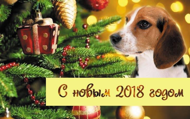 Привітання з Новим 2018 роком від «Карно®»